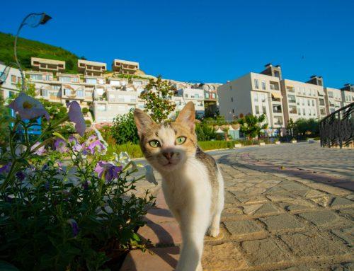 Bima më toksike për macet?