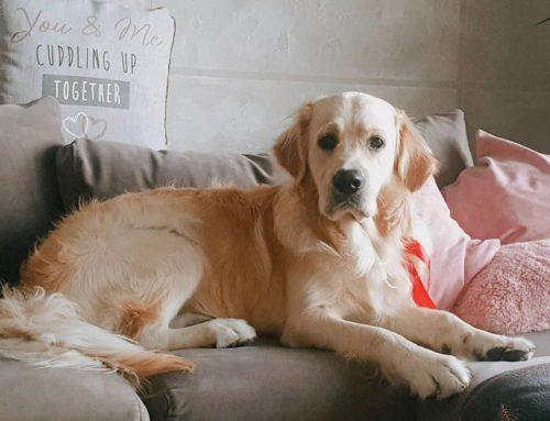Këshillat kryesore për pronarët e rinj të qenve